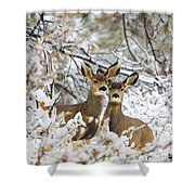 Winter Pair Shower Curtain