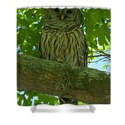 Winter Park Owl Shower Curtain