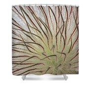 Winter Pasque Flower Shower Curtain