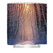 Winter Pathway Shower Curtain