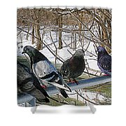 Winter Pigeon Party Shower Curtain