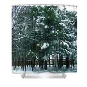 Winter Pine Tree  Shower Curtain