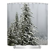 Winter Pines 2013 Shower Curtain
