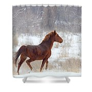Winter Proud Shower Curtain by Mike  Dawson