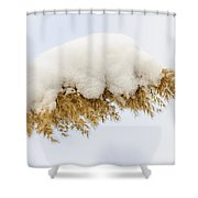 Winter Reed Under Snow Shower Curtain