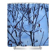 Winter Roses Shower Curtain
