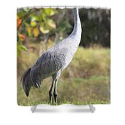 Winter Sandhill Crane Shower Curtain