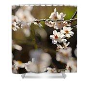 Winter Spring Almond Flowers Shower Curtain