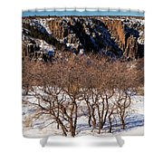 Winter Sprouts Shower Curtain