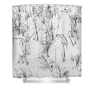 Winter Starkness Shower Curtain
