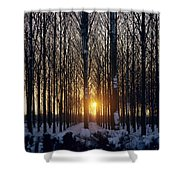 Winter Sunset Through The Trees Shower Curtain