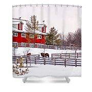 Winter Thoroughbreds Shower Curtain