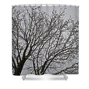 Winter Tree 6 Shower Curtain