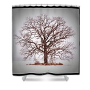 Winter Tree 8x10 Crop With White Bars Shower Curtain