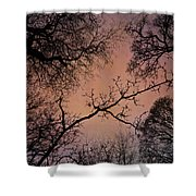 Winter Tree Canopy Shower Curtain