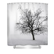 Winter Tree In Fog Shower Curtain