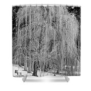 Winter Tree In Spokane - Black And White Shower Curtain