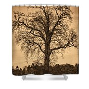 Winter Tree - Old Shower Curtain