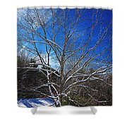 Winter Tree On Sky Shower Curtain