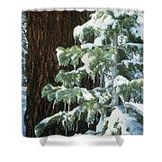 Winter Tree Sierra Nevada Mts Ca Usa Shower Curtain