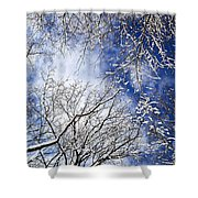 Winter Trees And Blue Sky Shower Curtain
