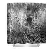 Winter Trees  B And W 1 Shower Curtain