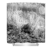 Winter Trees B And W 3 Shower Curtain