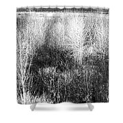 Winter Trees B And W 5 Shower Curtain