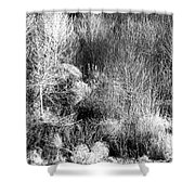 Winter Trees B And W 6 Shower Curtain