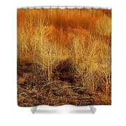 Winter Trees Color 3 Shower Curtain