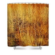 Winter Trees Color 4 Shower Curtain