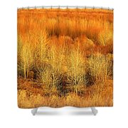 Winter Trees Color  7 Shower Curtain