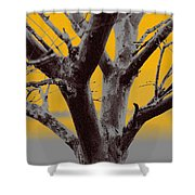 Winter Trees In Yellow Gray Mist 2 Shower Curtain