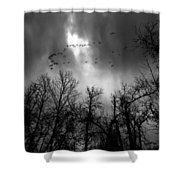 Winter Trees Moving Sky Shower Curtain
