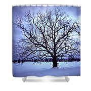 Winter Twilight Tree Shower Curtain