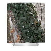 Winter Vine Shower Curtain