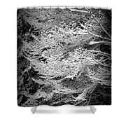 Snowy Boughs Shower Curtain