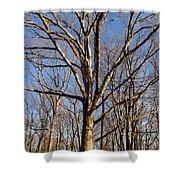 Winter White Oak Shower Curtain