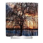 Winter Willow Shower Curtain