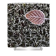 Winter With Frosted Leaf On Frozen Grass Shower Curtain
