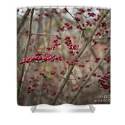 Winterberries Squared Shower Curtain