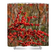 Winterberry Shower Curtain