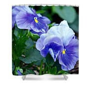 Winter's Blue Pansies Shower Curtain