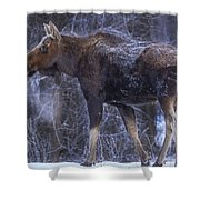 Winters Chill Shower Curtain