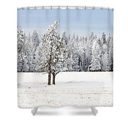 Winter's Coat Shower Curtain by Dee Cresswell
