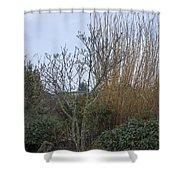 Winters Garden In Seattle  Shower Curtain