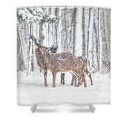 Winters Love Shower Curtain