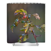 Winter's Oak Sapling Shower Curtain