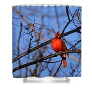 Winter's Red Beauty 5 Shower Curtain