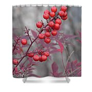 Winter's Red Shower Curtain